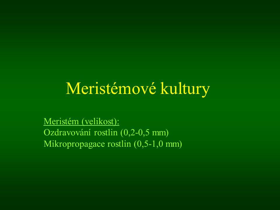 Meristémové kultury Meristém (velikost):