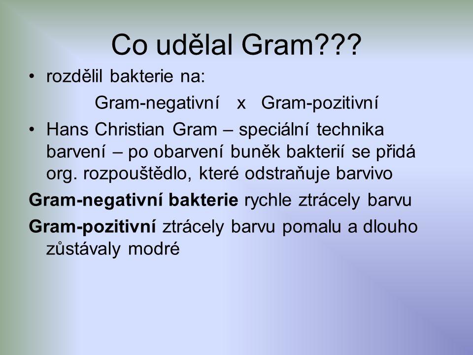 Gram-negativní x Gram-pozitivní