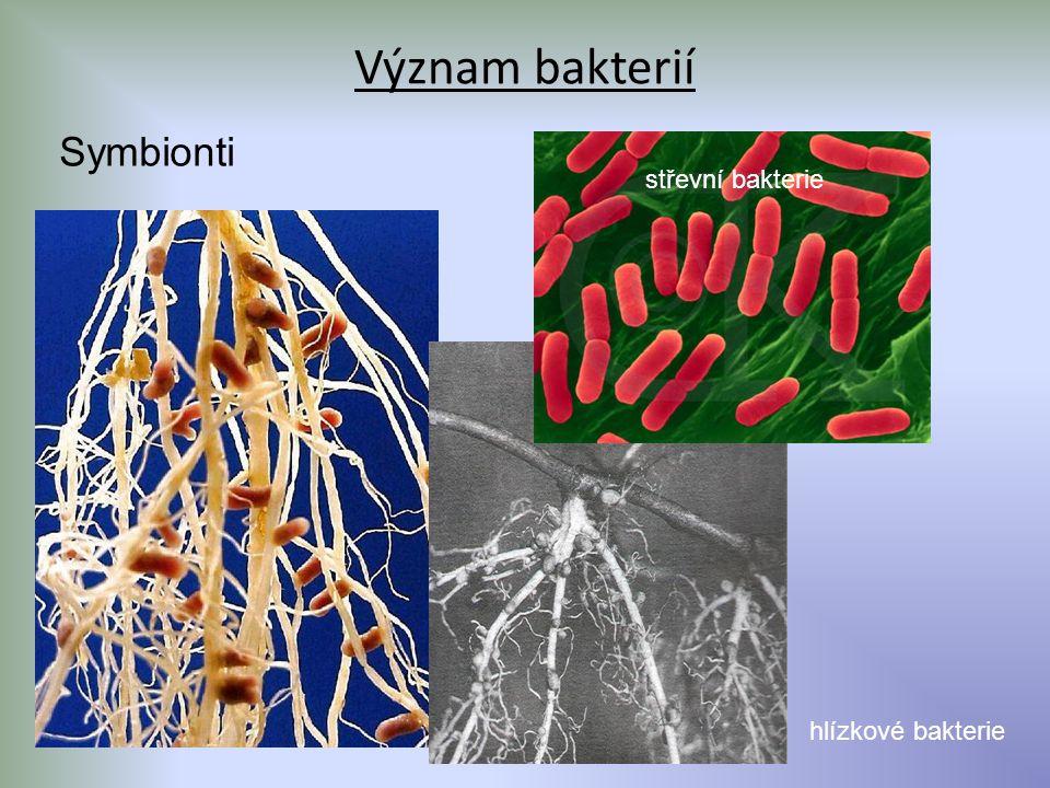 Význam bakterií Symbionti střevní bakterie hlízkové bakterie