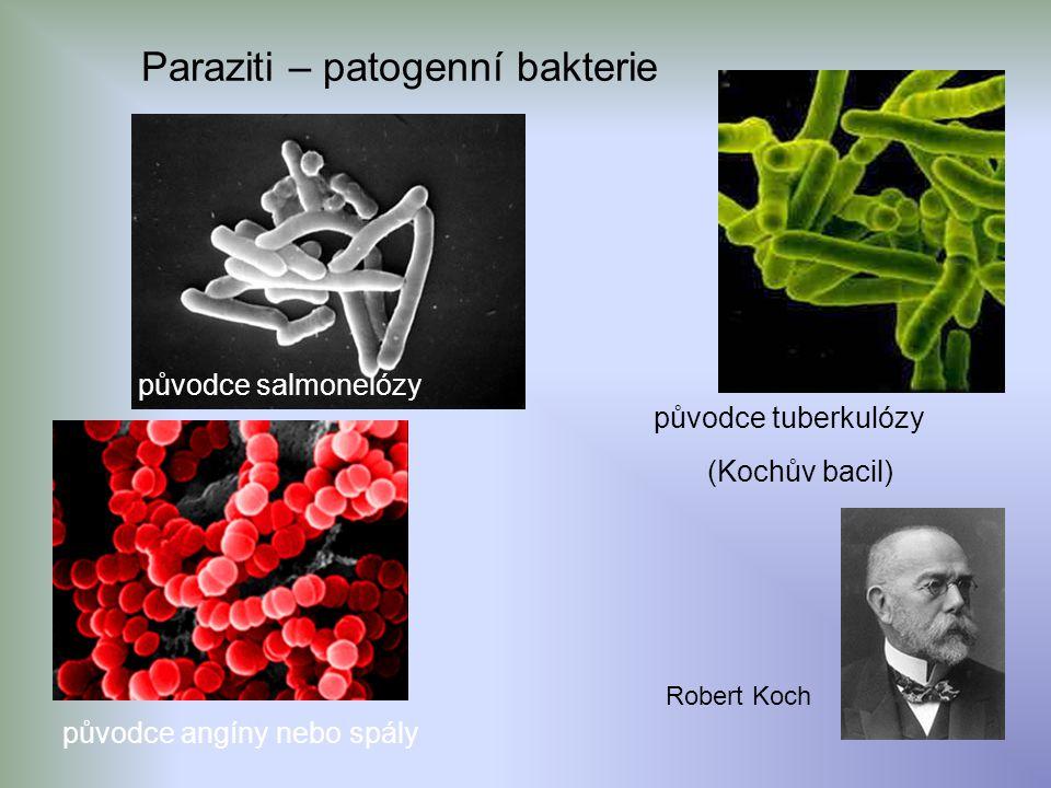 Paraziti – patogenní bakterie