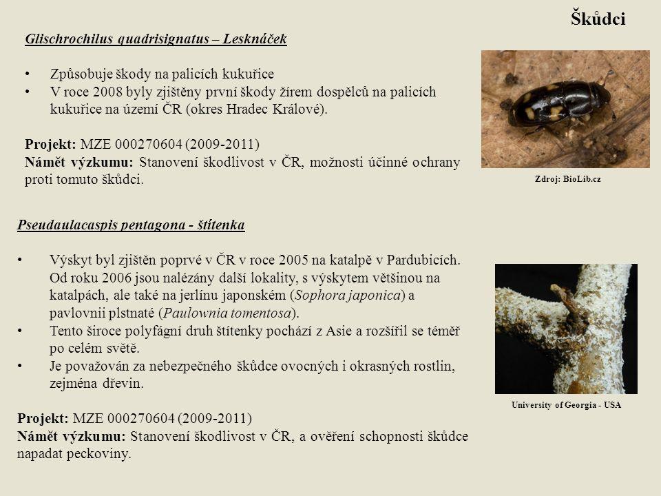 Škůdci Glischrochilus quadrisignatus – Lesknáček