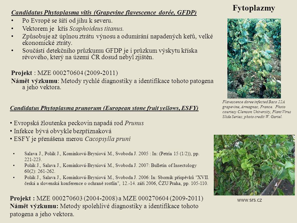 Fytoplazmy Candidatus Phytoplasma vitis (Grapevine flavescence dorée, GFDP) Po Evropě se šíří od jihu k severu.
