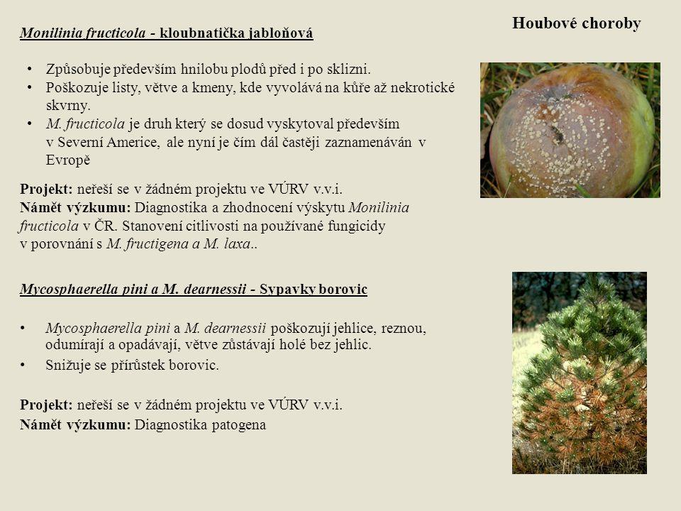 Houbové choroby Monilinia fructicola - kloubnatička jabloňová