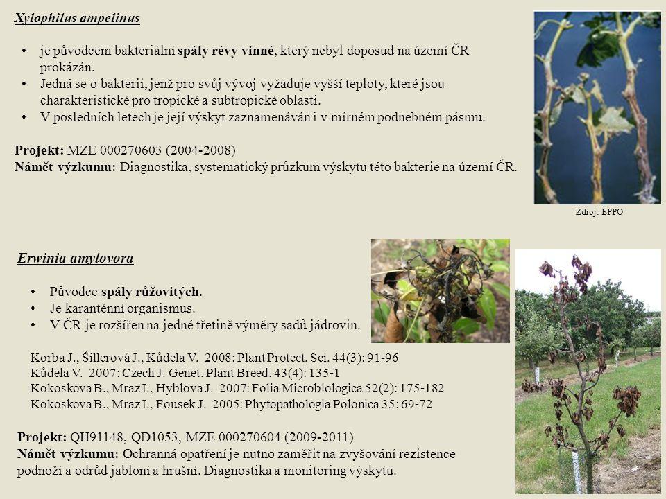 Erwinia amylovora Xylophilus ampelinus
