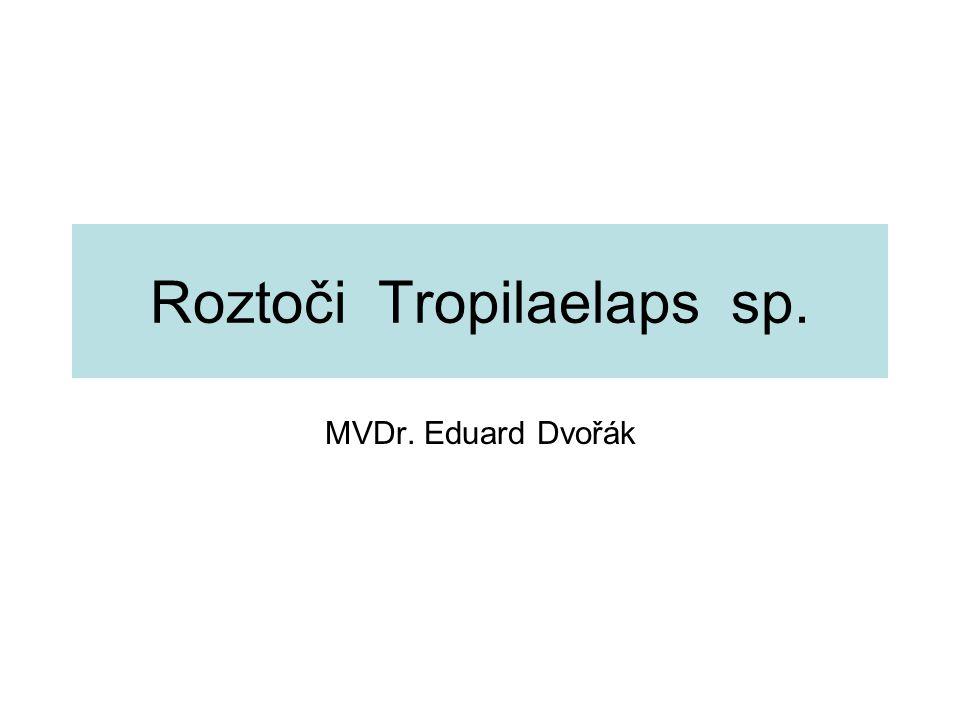 Roztoči Tropilaelaps sp.