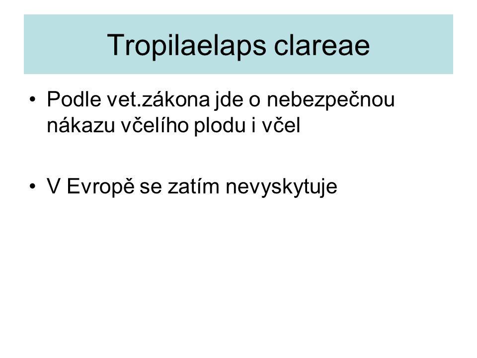 Tropilaelaps clareae Podle vet.zákona jde o nebezpečnou nákazu včelího plodu i včel.