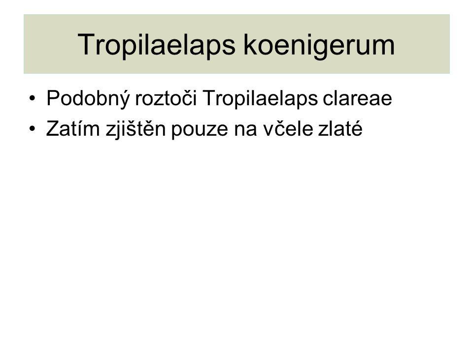 Tropilaelaps koenigerum