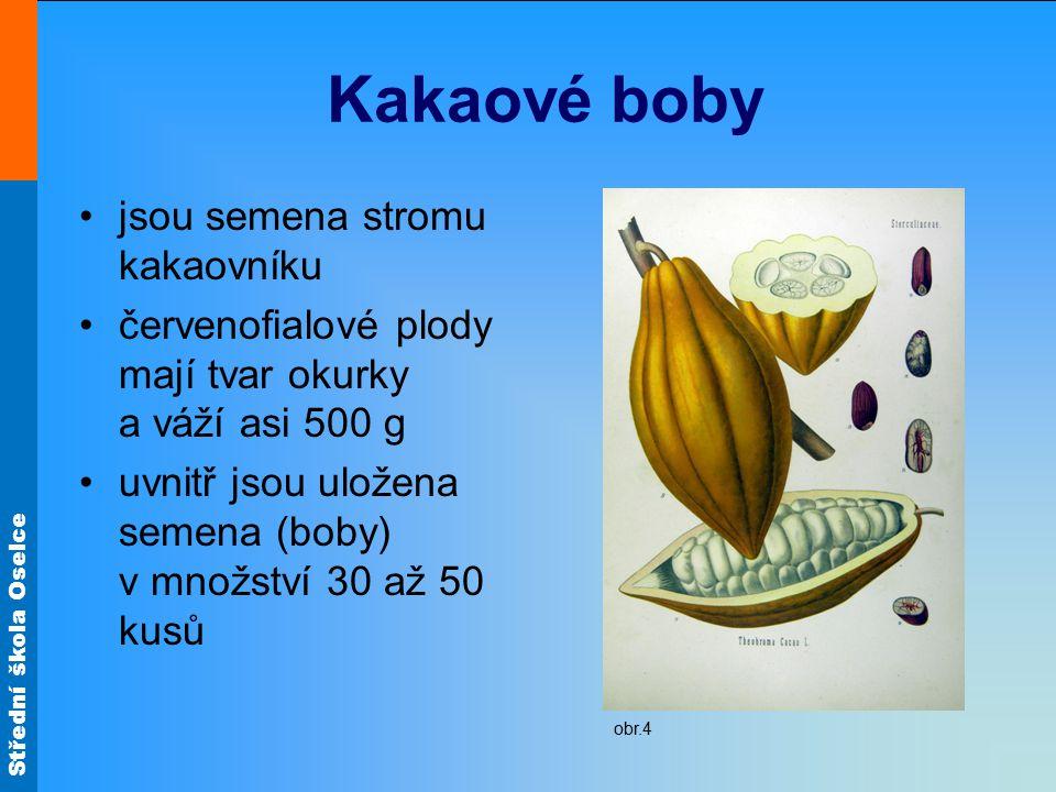 Kakaové boby jsou semena stromu kakaovníku