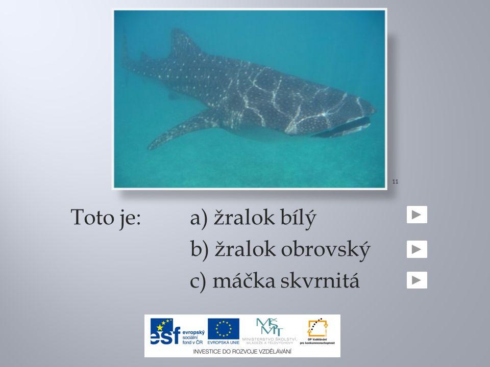 11 Toto je: a) žralok bílý b) žralok obrovský c) máčka skvrnitá