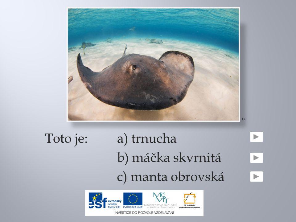 12 Toto je: a) trnucha b) máčka skvrnitá c) manta obrovská