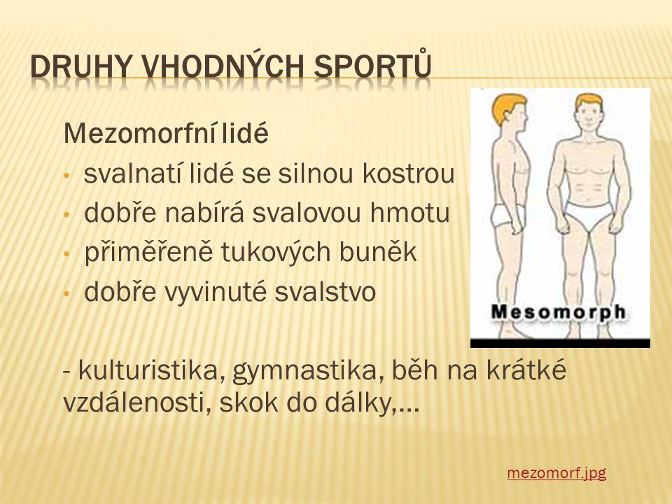 Druhy vhodných sportů Mezomorfní lidé svalnatí lidé se silnou kostrou