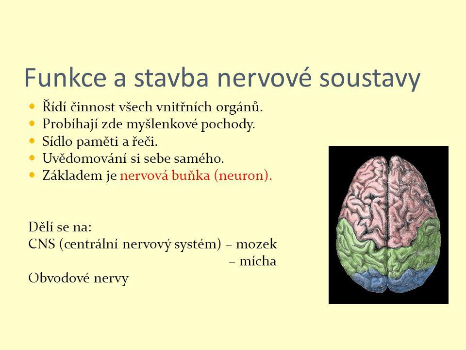 Funkce a stavba nervové soustavy