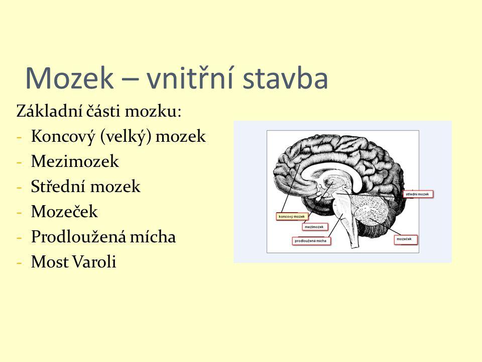 Mozek – vnitřní stavba Základní části mozku: Koncový (velký) mozek