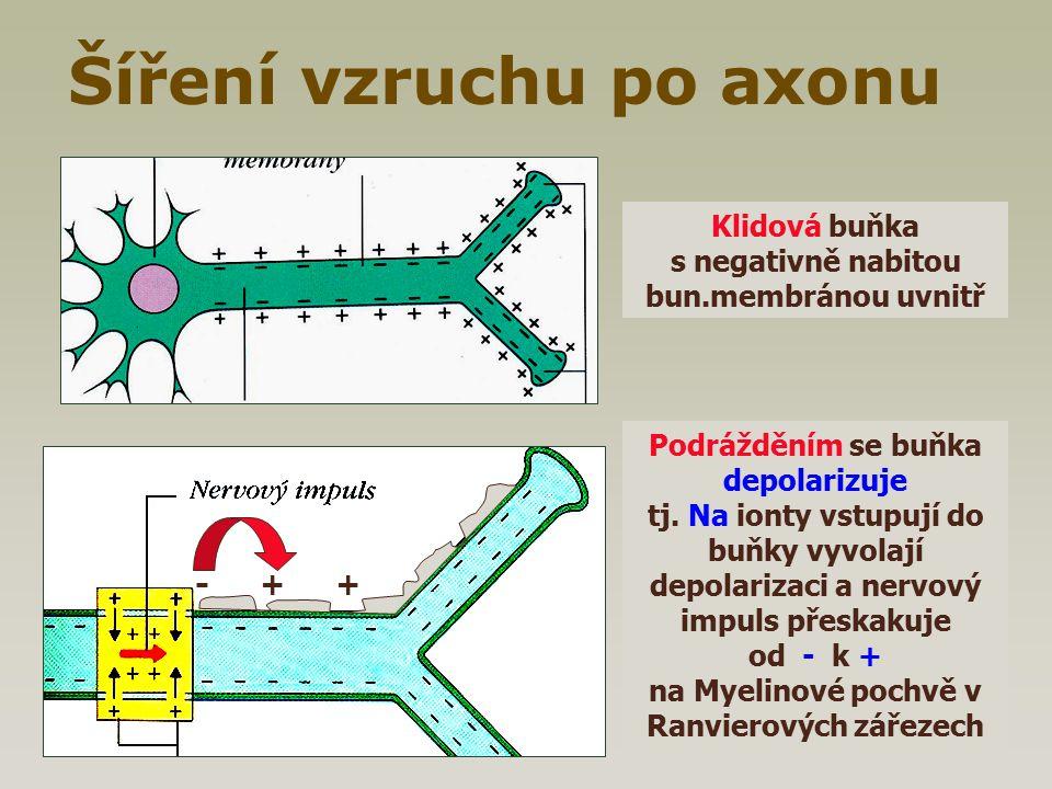Šíření vzruchu po axonu