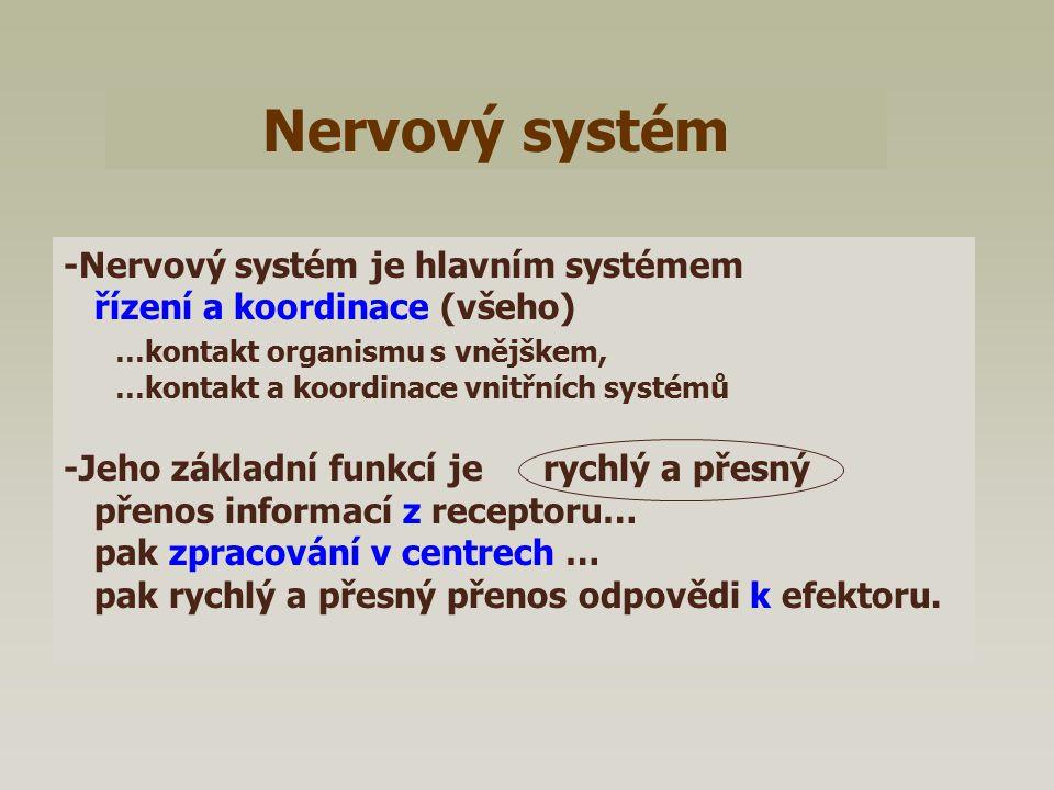 Nervový systém -Nervový systém je hlavním systémem
