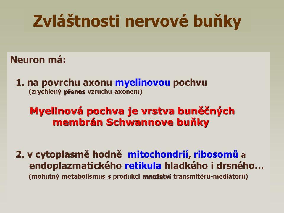 Zvláštnosti nervové buňky