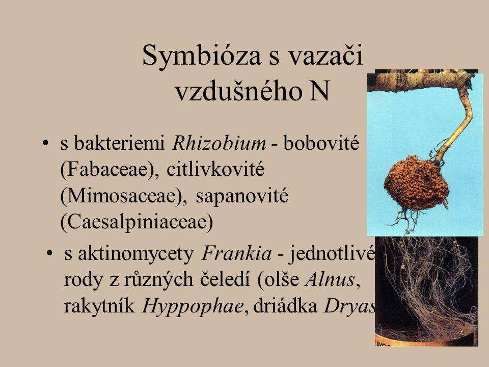 Symbióza s vazači vzdušného N