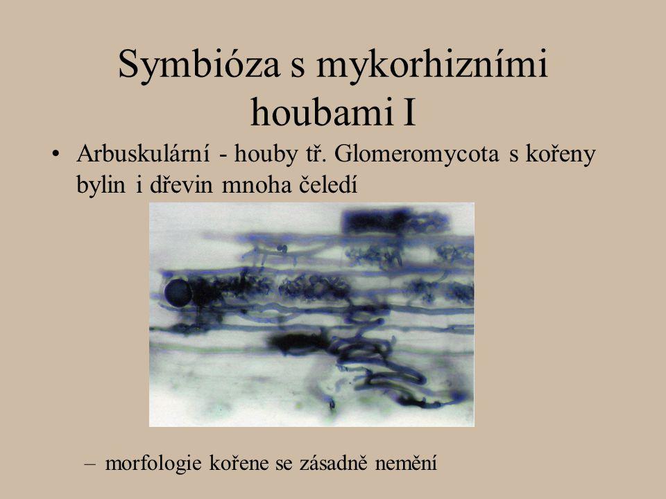 Symbióza s mykorhizními houbami I