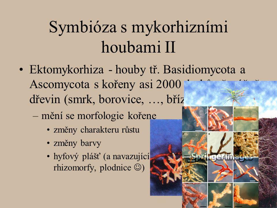 Symbióza s mykorhizními houbami II