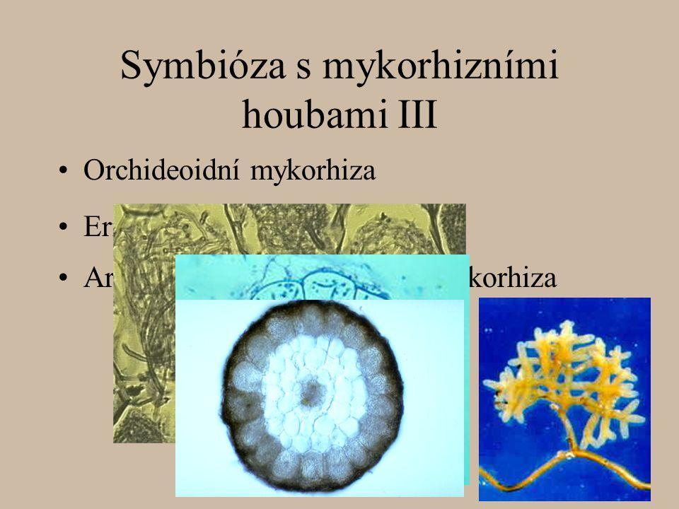 Symbióza s mykorhizními houbami III