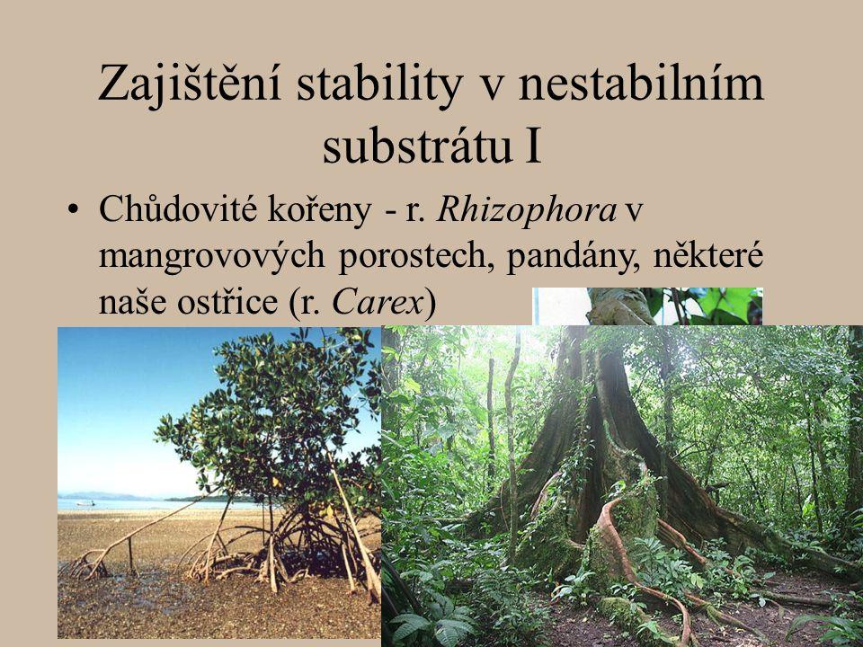 Zajištění stability v nestabilním substrátu I