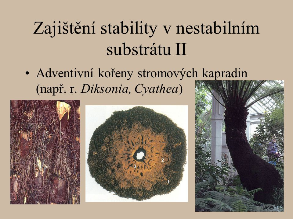 Zajištění stability v nestabilním substrátu II