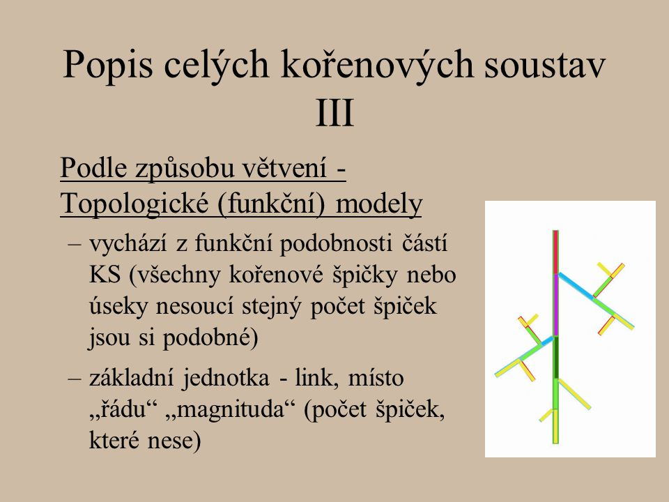 Popis celých kořenových soustav III