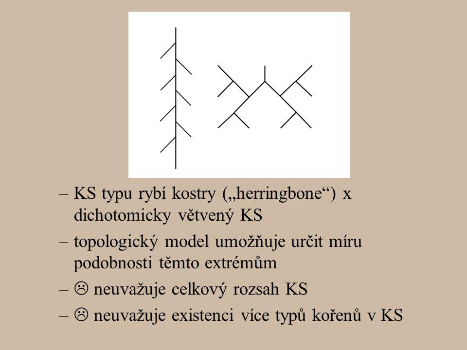 """KS typu rybí kostry (""""herringbone ) x dichotomicky větvený KS"""