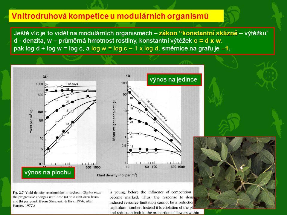 Vnitrodruhová kompetice u modulárních organismů