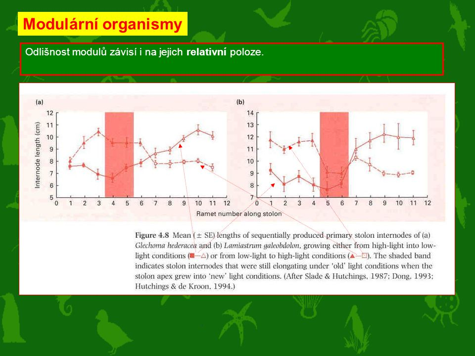Modulární organismy Odlišnost modulů závisí i na jejich relativní poloze.