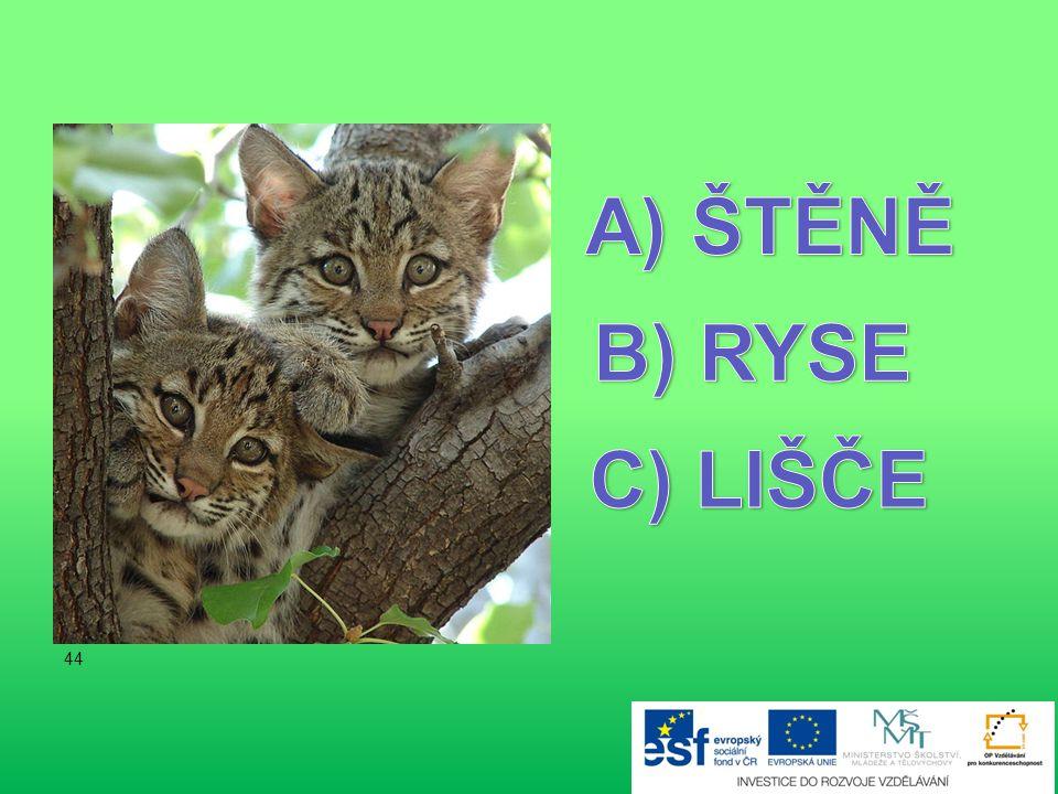 ŠTĚNĚ B) RYSE C) LIŠČE 44