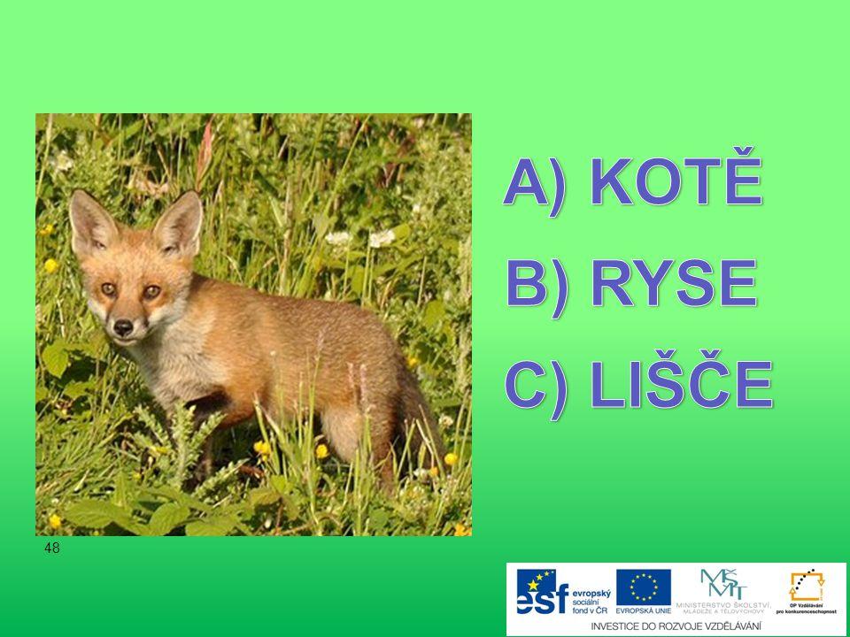 KOTĚ B) RYSE C) LIŠČE 48