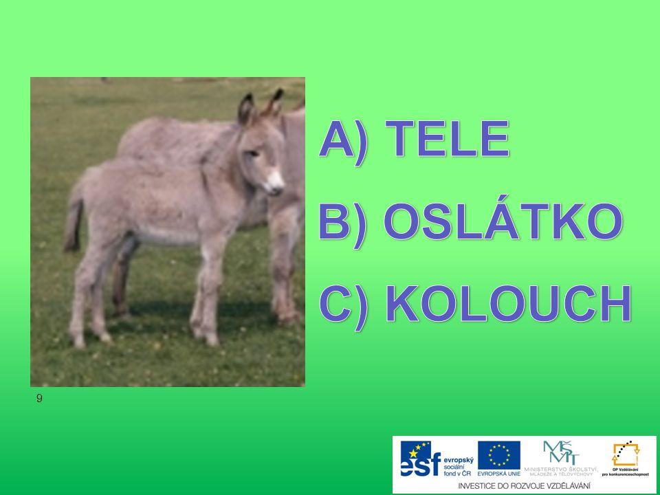 TELE B) OSLÁTKO C) KOLOUCH