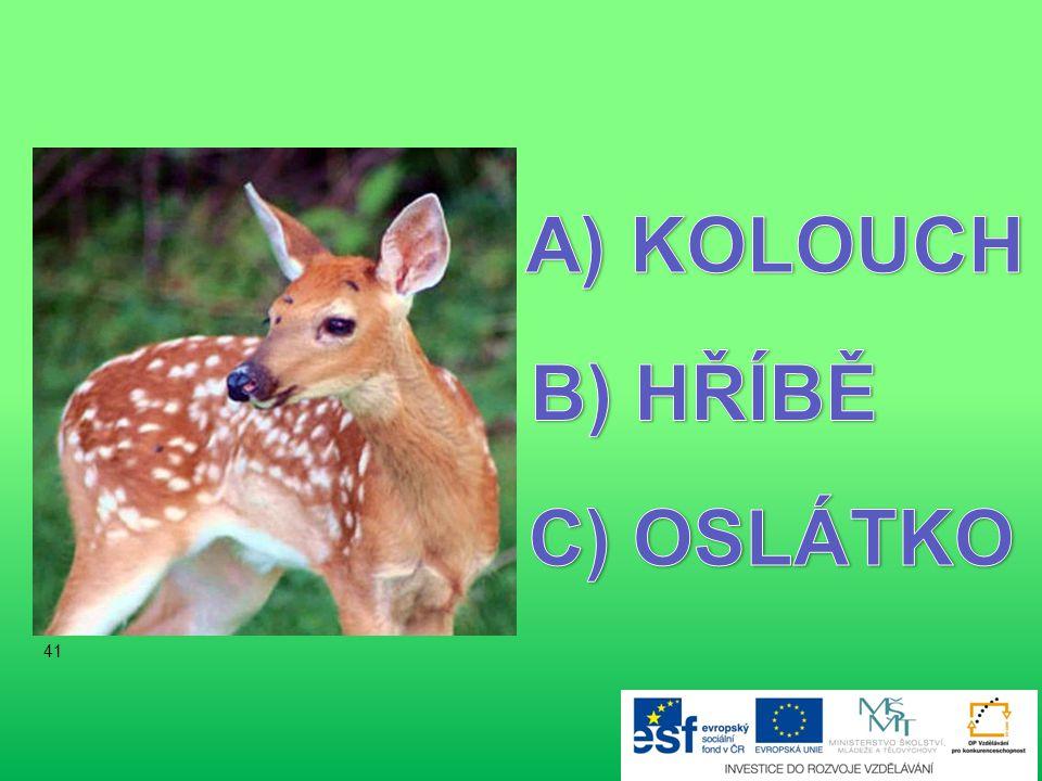 KOLOUCH B) HŘÍBĚ C) OSLÁTKO