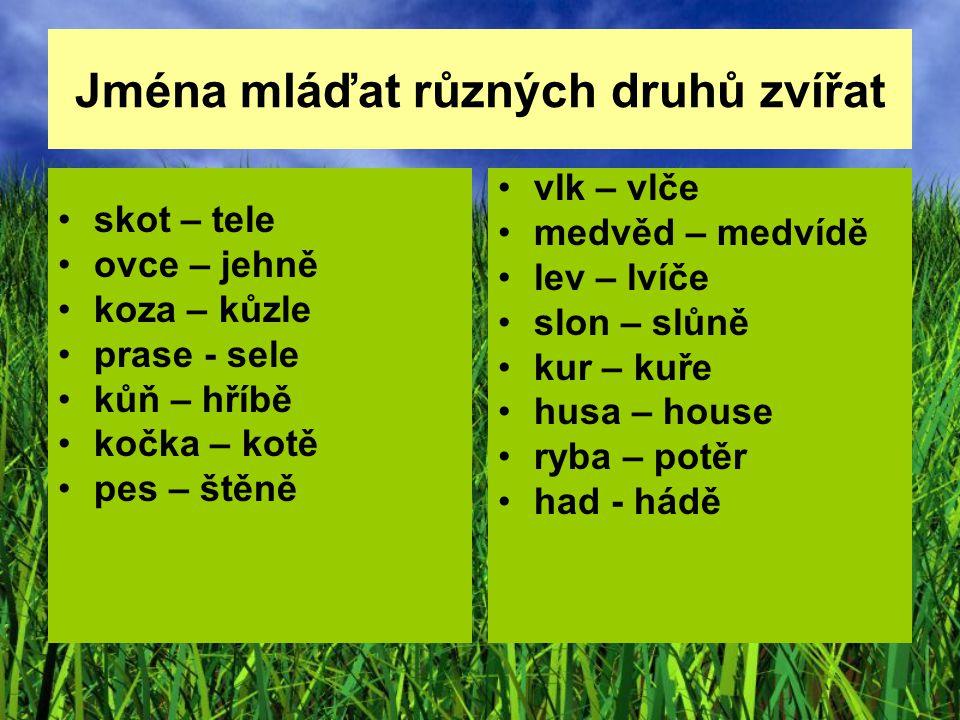 Jména mláďat různých druhů zvířat