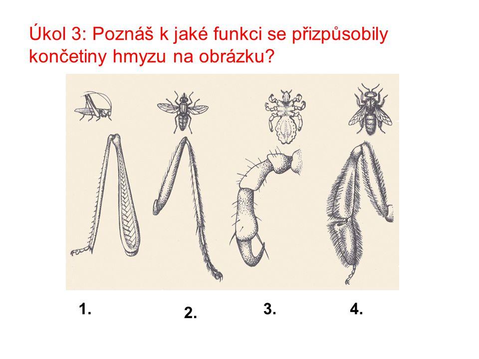 Úkol 3: Poznáš k jaké funkci se přizpůsobily končetiny hmyzu na obrázku