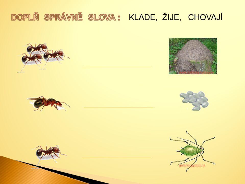 DOPLŇ SPRÁVNĚ SLOVA : KLADE, ŽIJE, CHOVAJÍ galerie.gymjil.cz