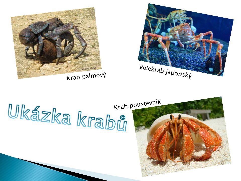 Velekrab japonský Krab palmový Krab poustevník Ukázka krabů