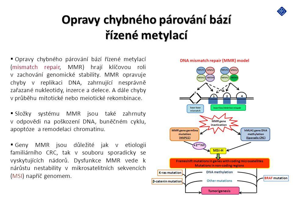 Opravy chybného párování bází řízené metylací