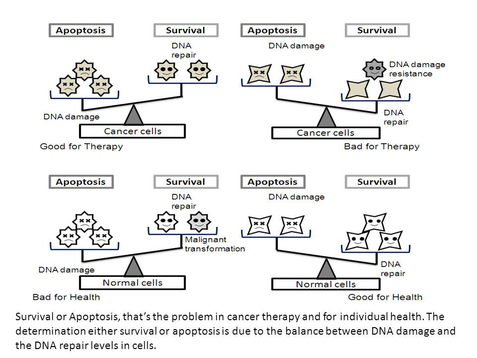 Survival or Apoptosis, that's the problem in cancer therapy and for individual health. The