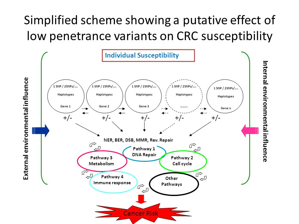 Simplified scheme showing a putative effect of low penetrance variants on CRC susceptibility