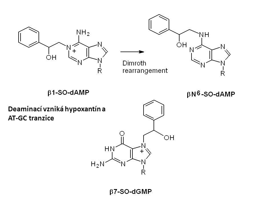 Deaminací vzniká hypoxantín a