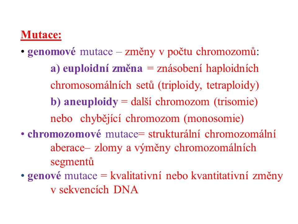 Mutace: genomové mutace – změny v počtu chromozomů: a) euploidní změna = znásobení haploidních chromosomálních setů (triploidy, tetraploidy)