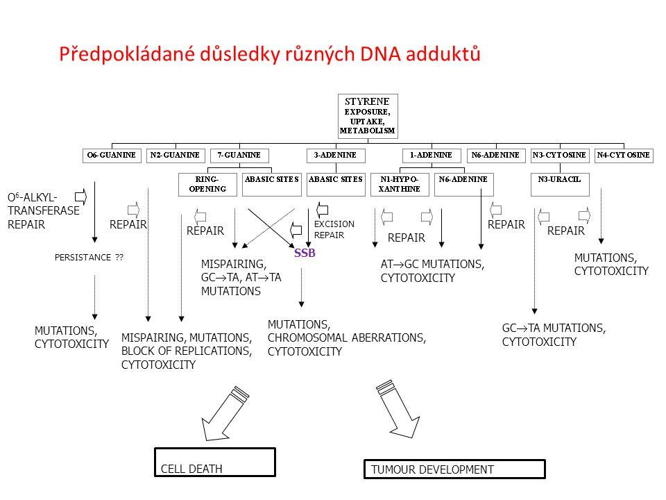 Předpokládané důsledky různých DNA adduktů