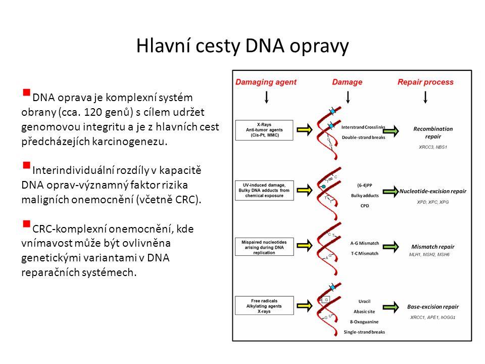 Hlavní cesty DNA opravy