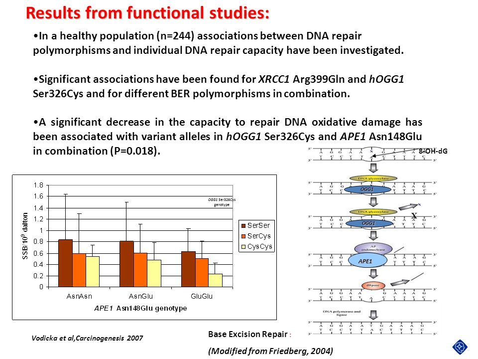 Results from functional studies: