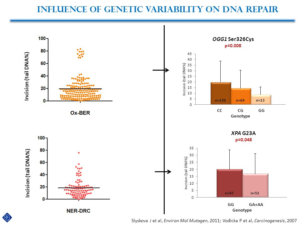Influence of genetic variability on DNA repair