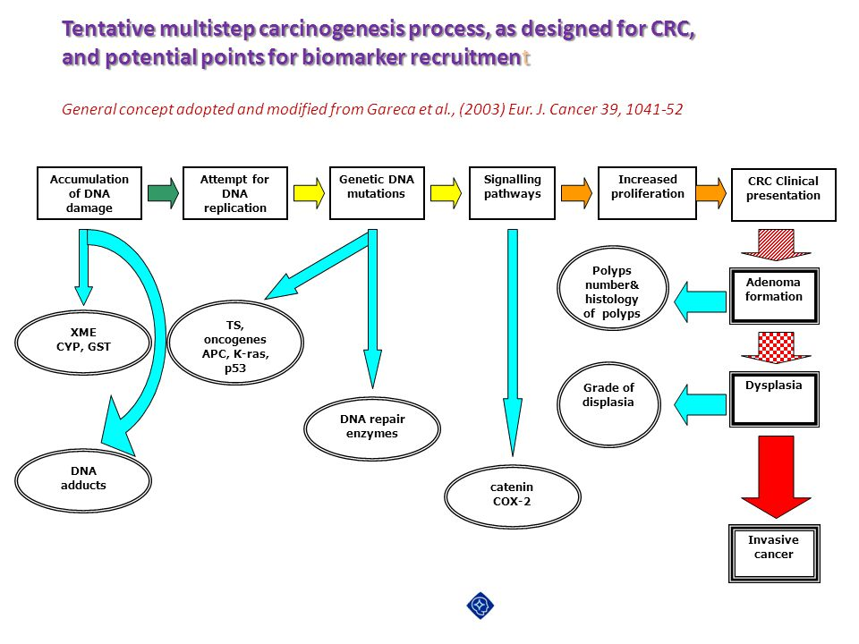 Tentative multistep carcinogenesis process, as designed for CRC,