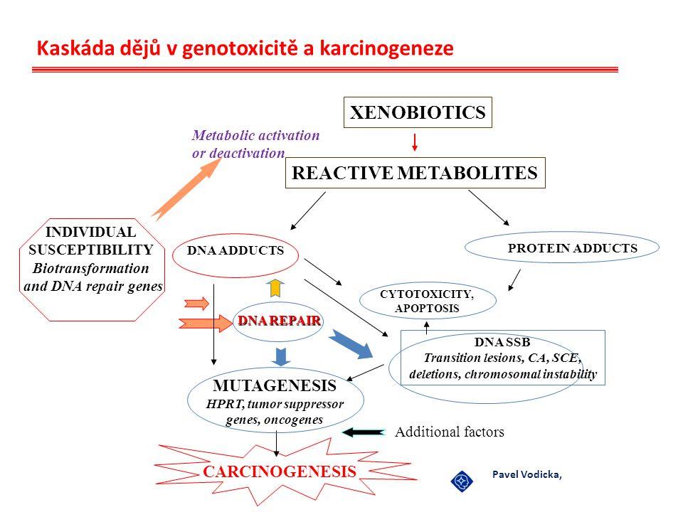 Kaskáda dějů v genotoxicitě a karcinogeneze