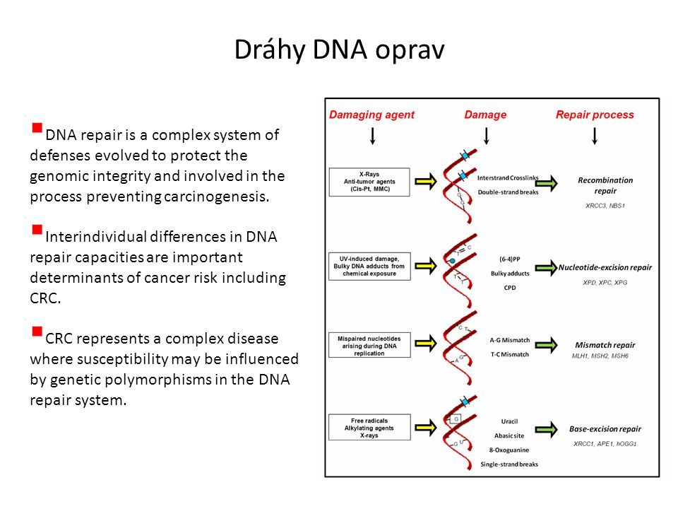 Dráhy DNA oprav